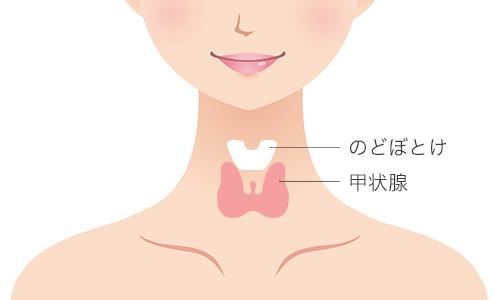 甲状腺の場所